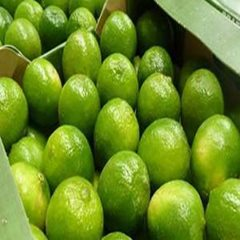 Fresh Seedless Lime - Tahti Lime